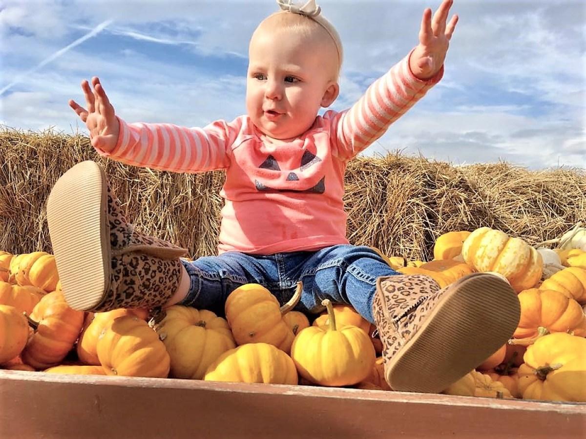 McMillan Farms Pumpkin Adventure! - pumpkin photo last year