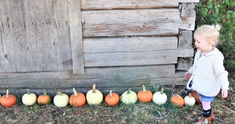 McMillan Farms Pumpkin Patch Adventure! – Kelowna B.C.