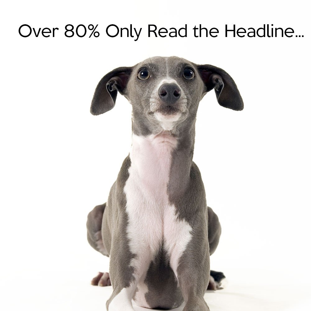 Miniature greyhound looking up at text: Over 80% only read the headlines...