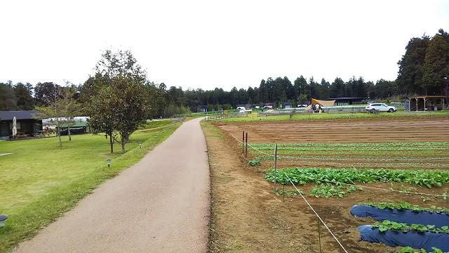 THEファームキャンプ場 野菜収穫体験