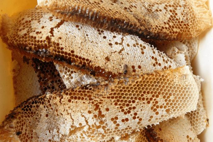 manfaat madu lebah asli untuk kesehatan dan kecantikan