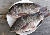 khasiat ikan bujair
