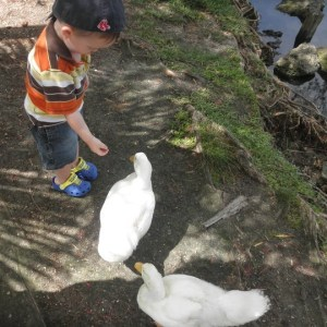 Jakobi feeding the ducks