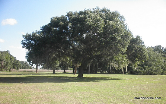 Makinson Island In Kissimmee Is The Perfect Family Vacation Spot