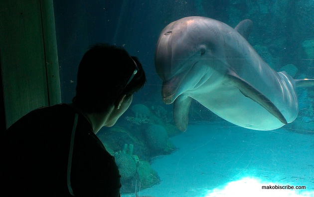How To Play Games With Dolphins At SeaWorld