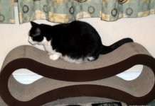 Do You Have A Pet Friendly Living Space?