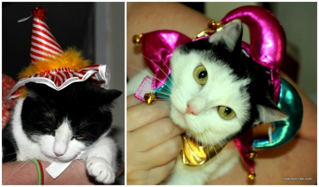 See Which Halloween Costumes For Pets Are Trending
