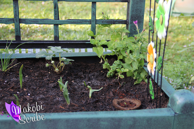 Summer Project: Container Gardening With Kids