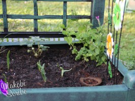 MiracleGro gardening with kids