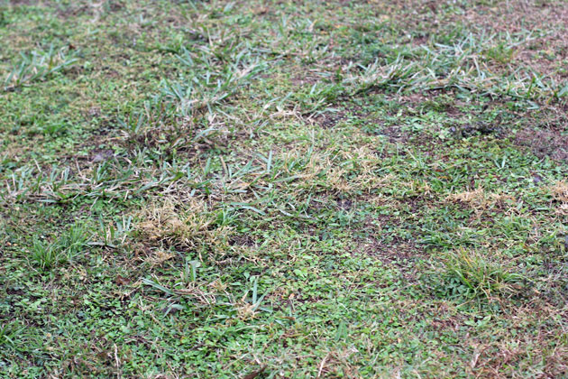Replacing-your-lawn