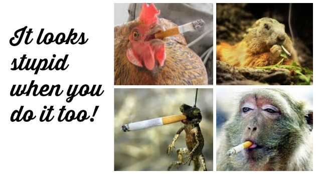 How Much Harm Can Smoking Really Do