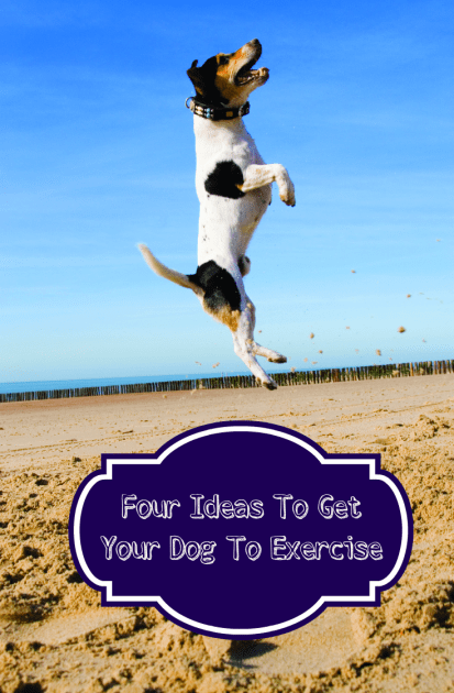 Four Ideas To Get Your Dog To Exercise