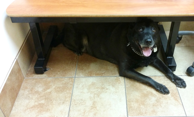 show your dog you care with a vet visit