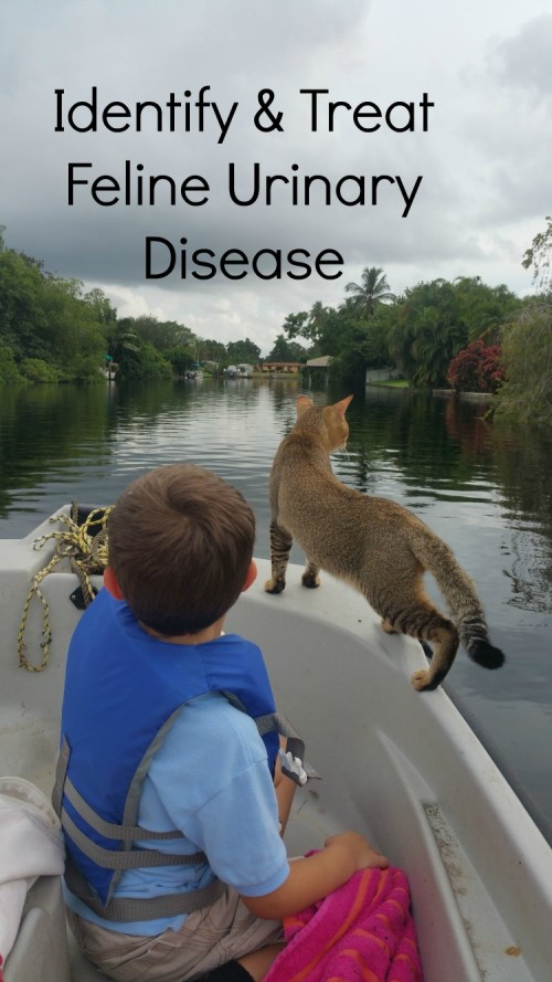 treatfeline urinary disease