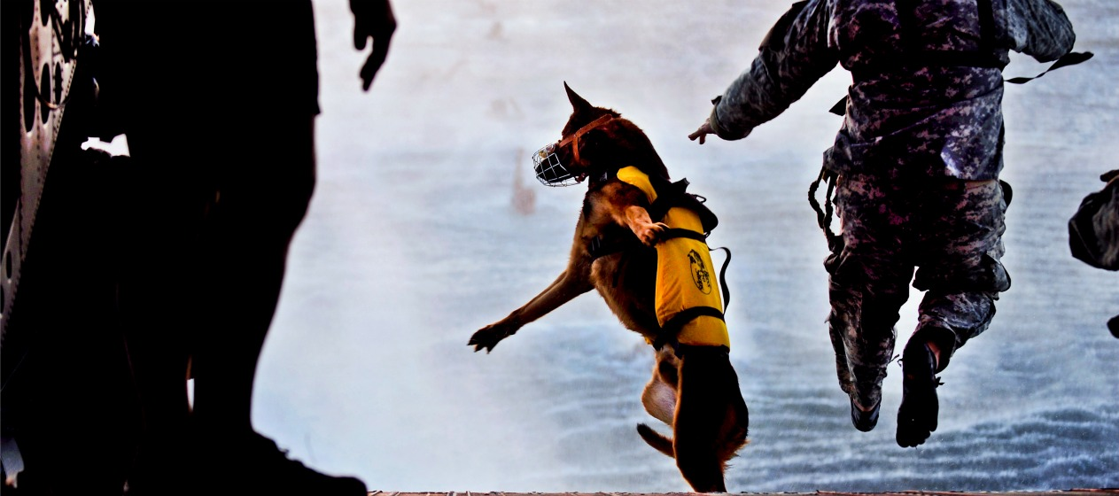9 Things I'll Bet You Didn't Know About Military Service Dogs