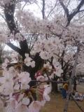 Sakura2020