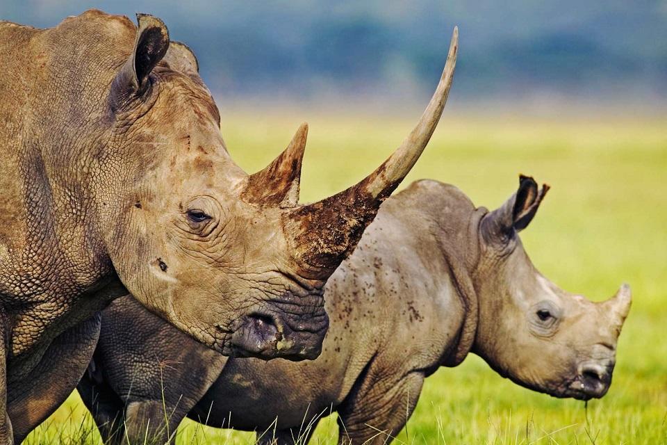 Zuid-Afrika - Krugerpark en omgeving