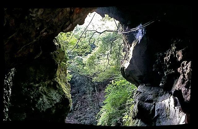 出口の木々と光