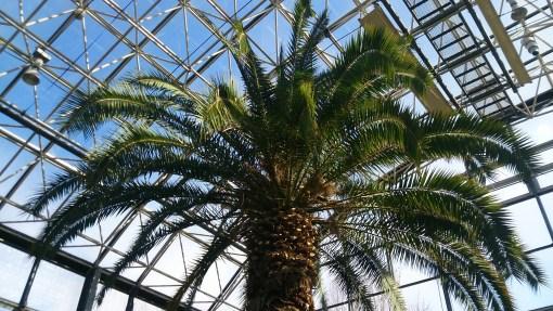 グリーンピア春日井の温室のヤシの木