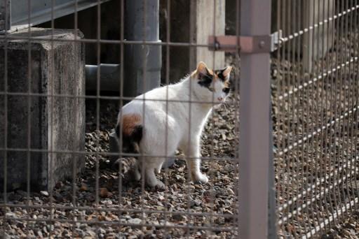 曼荼羅寺の柵の向こうの猫02