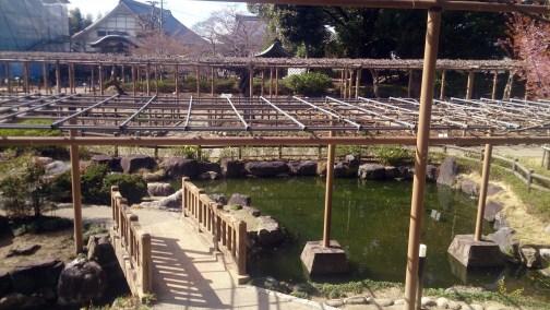 曼荼羅寺の高台から見下ろす池
