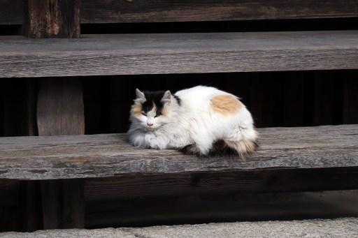 曼荼羅寺の木の階段と猫01