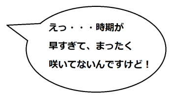 曼荼羅寺の文乃コメ01