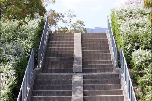 トヨタ4-5のユキヤナギの階段