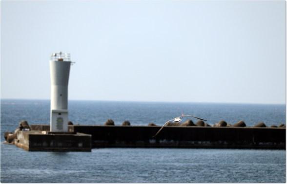 越前5-2-7飛ぶウミネコと灯台1