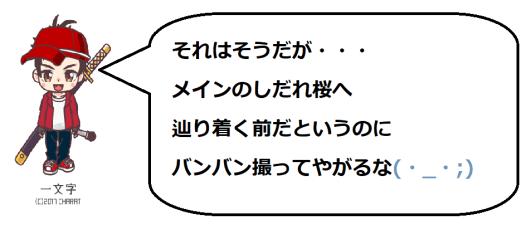 奥山田桜1の一文字コメ2