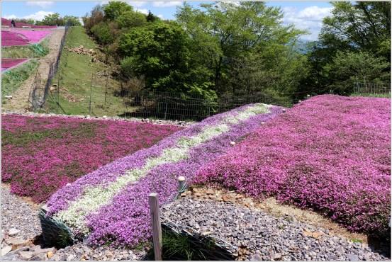 茶臼山5の7芝桜の階段
