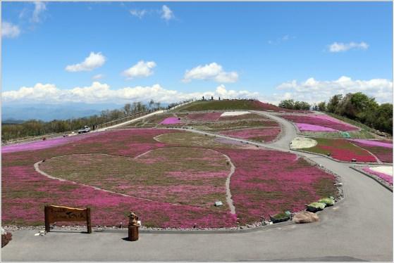 茶臼山3の17芝桜の丘の風景