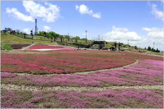 茶臼山4の11花壇