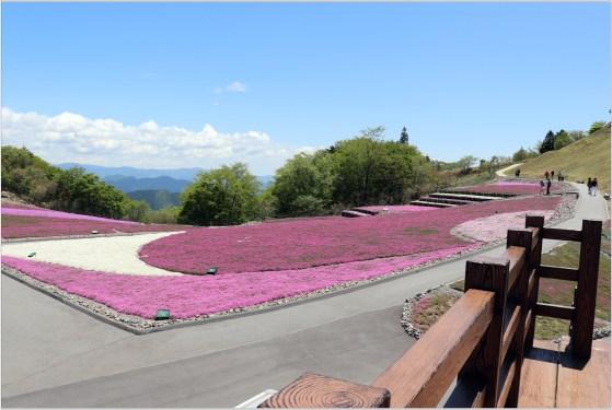 茶臼山3の18芝桜の風景