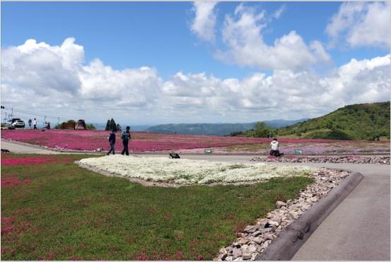 茶臼山5の5花壇と高原