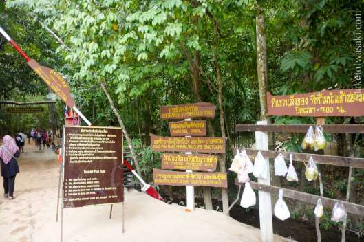 Khlong Thom のエメラルドプール