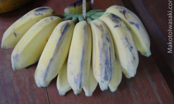 バナナの皮は上からでも下からでも剥ける