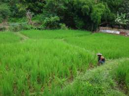 Ban Huai Suea Thao