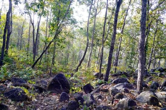 Pai の森。カラッとしていて乾燥気味の植生