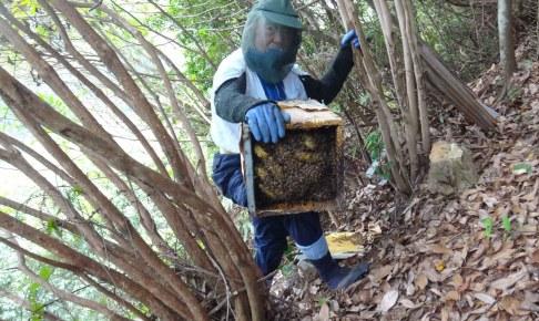 蜜蜂名人菅 Bee Meister Suga