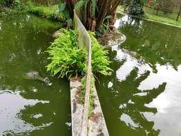 プンツォリンのクロコダイル園