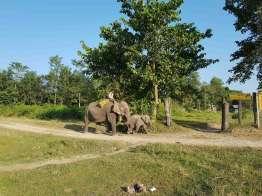象がいるところあり