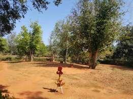オーロビル探訪 Auroville オーガニックコミュニティー