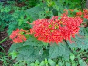 今日の花々: Pai