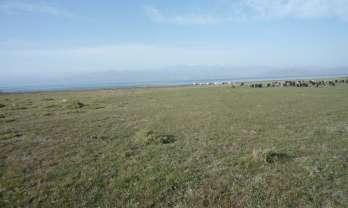 イシュクル湖の北岸を東へ走る