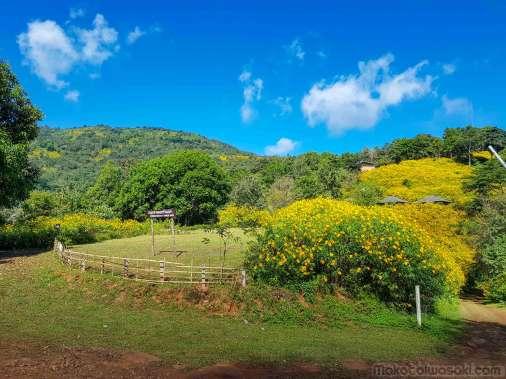 山の上の方にも黄色い花がある。