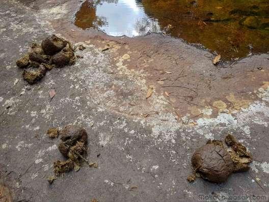 プークラドゥン國立公園を歩く