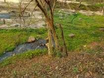 ヒアム温泉はかぶり湯のみ:ラオス