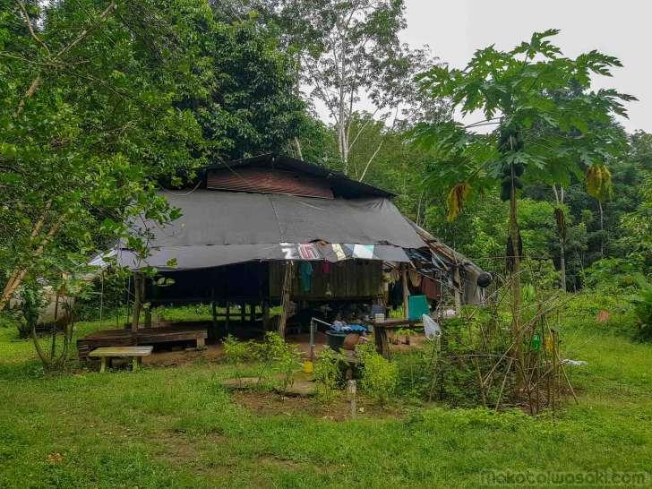 ゴム園管理人の自給的農園担っている。