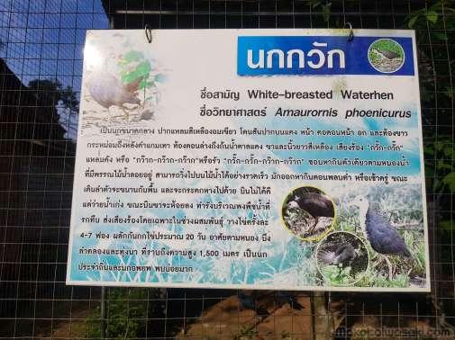 野生動物孵化園パッタルンには珍しい動物がいっぱい